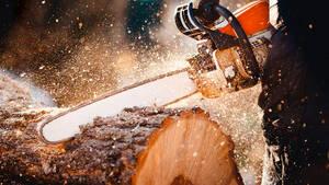 Holz Future: Bäume wachsen in den Himmel ‑ wieder neues Allzeithoch!  / Foto Shutterstock