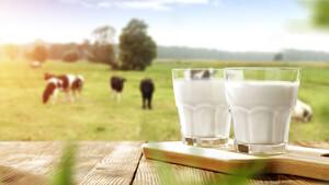 AKTIONÄR‑Tipp A2 Milk schießt auf Rekordhoch – die Story ist heiß!  / Foto: Shutterstock