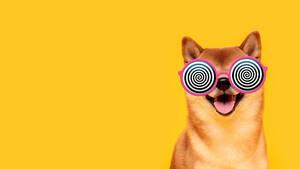 Dogecoin: Der Wahnsinn geht weiter  / Foto: Shutterstock