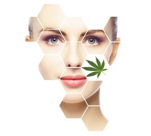 Cannabis‑Fantasie beflügelt: Dermapharm nach 55%‑Prozent‑Rallye – jetzt noch zugreifen?