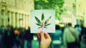 Aurora Cannabis versetzt Branche in Schockstarre – die Details