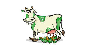 Facebook: Cashcow WhatsApp