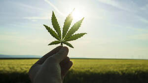 Cannabis‑Player Canopy Growth: Aktie vor 40‑Prozent‑Anstieg?