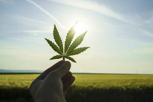 Stark: Aurora Cannabis gewinnt 10% – war's das bereits mit der Korrektur?