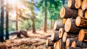 Munich Re: Rendite mit Wald  / Foto: Shutterstock
