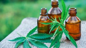 Nach den Zahlen: Aurora Cannabis mit Lebenszeichen  / Foto: Shutterstock