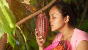 Kakao Update: Nach dem Break kommt die Rallye  / Foto: Shutterstock