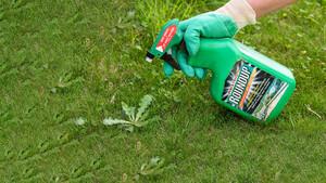 Bayer‑Aktie springt an – schnelle Lösung in der Causa Glyphosat voraus?