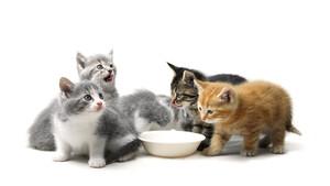 Top‑Tipp Derivate: Hamsterkäufe bei Katzenfutter